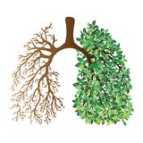 Human lungs. Respiratory system. Healthy lungs. Light in the form of a tree. Line art. Drawing by hand. Medicine. Human lungs. Respiratory system. Healthy lungs stock illustration