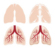 Human lungs vector Royalty Free Stock Photo