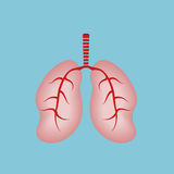 Human Lungs.World Asthma Day Royalty Free Stock Photography