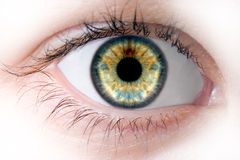 Human macro beauty  eye Royalty Free Stock Photography