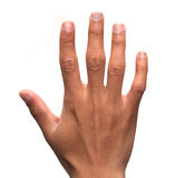 Human Male hand. A amle hand isolated on white Stock Image
