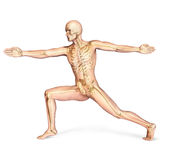 Human Male In Dynamic Posture, With Full Skeleton Superimposed. Royalty Free Stock Photo