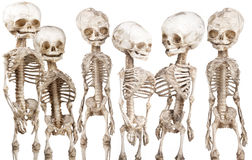 Human medical skeleton Royalty Free Stock Photo