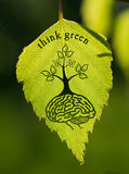 Human mind and leaf Stock Images