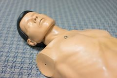 Human model used for resurrection training. Stock Image