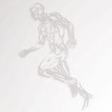 Human Muscle Anatomy royalty free illustration
