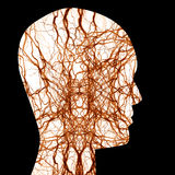 Human nerve system Stock Photo