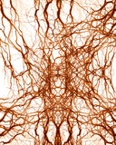 Human nerve system Stock Image