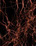 Human nerve system Stock Photo