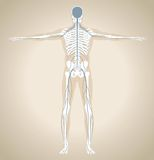 The human nervous system. The human (male) nervous system with skeleton and silhouette of body. Vector illustration Royalty Free Stock Photography