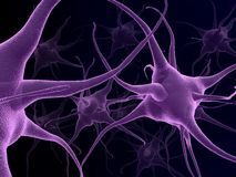 Human neurons Royalty Free Stock Photography