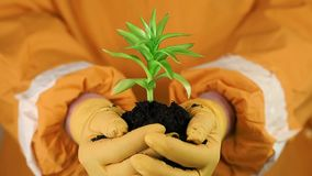 Human in orange protective suit holding in hands soil and a green young plant stock footage
