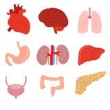 Human organ anatomy set Stock Photography