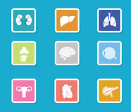 Human organ icon set. Modern flat design anatomy icons Royalty Free Stock Image