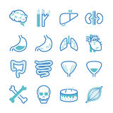 Human organ icons set. Flat Design Illustration: Human organ icons set vector illustration