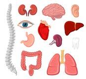 Human organ isolated icon set for anatomy design Royalty Free Stock Photo