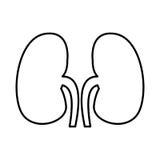 Human organ kidneys icon. Vector illustration design Royalty Free Stock Photography