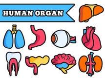Human organ thin line illustration concept set. Design Stock Images