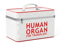 Human organ for transplant box. 3D illustration Stock Photos