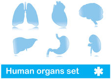 Human organs Stock Photography