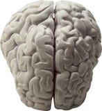 Human organs-brain Royalty Free Stock Images