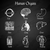 Human Organs Chalkboard Icons Royalty Free Stock Images