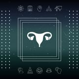 Human organs. Female uterus icon. Human organs. Female uterus silhouette symbol Stock Photo