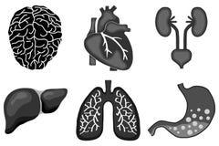Human organs Royalty Free Stock Photos