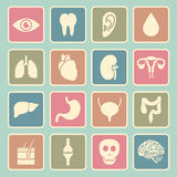 Human organs icon Royalty Free Stock Photos