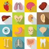 Human organs icons set, flat style. Human organs icons set. Flat illustration of 16 human organs icons for web stock illustration