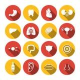 Human Organs Icons Stock Image