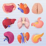 Human organs icons stock photography