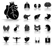 Human Organs - Iconset - Icons royalty free illustration
