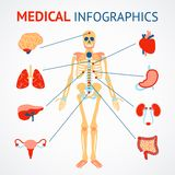 Human organs infographic Royalty Free Stock Images