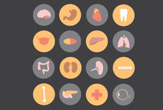 Human organs - Medicine. Vector icon human organs medicine royalty free illustration