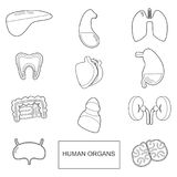 Human organs in outline style. Vector icons set isolate on white background Stock Photos