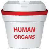 Human organs Royalty Free Stock Photos
