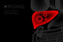 Human Organs X-ray set, Liver infection concept idea red color. Illustration isolated glow in the dark background, with Organ text icon and copy space Royalty Free Stock Photography