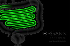 Human Organs X-ray set, Small Intestine infection concept idea green color. Illustration isolated glow in the dark background, with Organ text icon and copy Royalty Free Stock Photos
