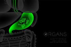 Human Organs X-ray set, Stomach infection concept idea green color. Illustration isolated glow in the dark background, with Organ text icon and copy space Royalty Free Stock Images