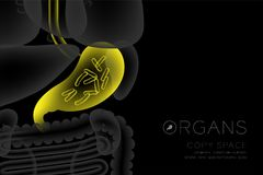 Human Organs X-ray set, Stomach infection concept idea yellow color. Illustration isolated glow in the dark background, with Organ text icon and copy space Royalty Free Stock Photos