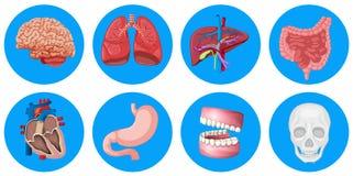 Human organs on round badge. Illustration Royalty Free Stock Photos
