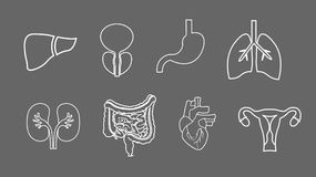 Human organs line icons set. Anatomy of body. Reproductive system, Lungs, Uterus, stomach, heart, liver illustrations. Human organs set. Anatomy of body royalty free illustration
