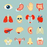 Human organs set. Of eye tooth lungs brain isolated vector illustration Royalty Free Stock Photos