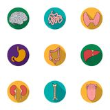 Human organs set icons in flat style. Big collection of human organs vector symbol  Stock Images