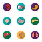 Human organs set icons in flat style. Big collection of human organs vector symbol  Royalty Free Stock Images