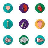 Human organs set icons in flat style. Big collection of human organs vector symbol stock illustration Stock Photos