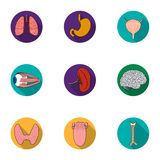 Human organs set icons in flat style. Big collection of human organs vector symbol stock illustration Royalty Free Stock Images