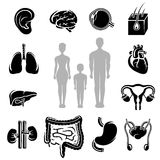Human organs set. Silhouette people. Vector Stock Photo