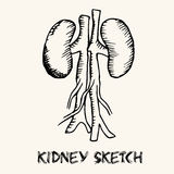 Human organs in sketches style set. Vector Stock Photo